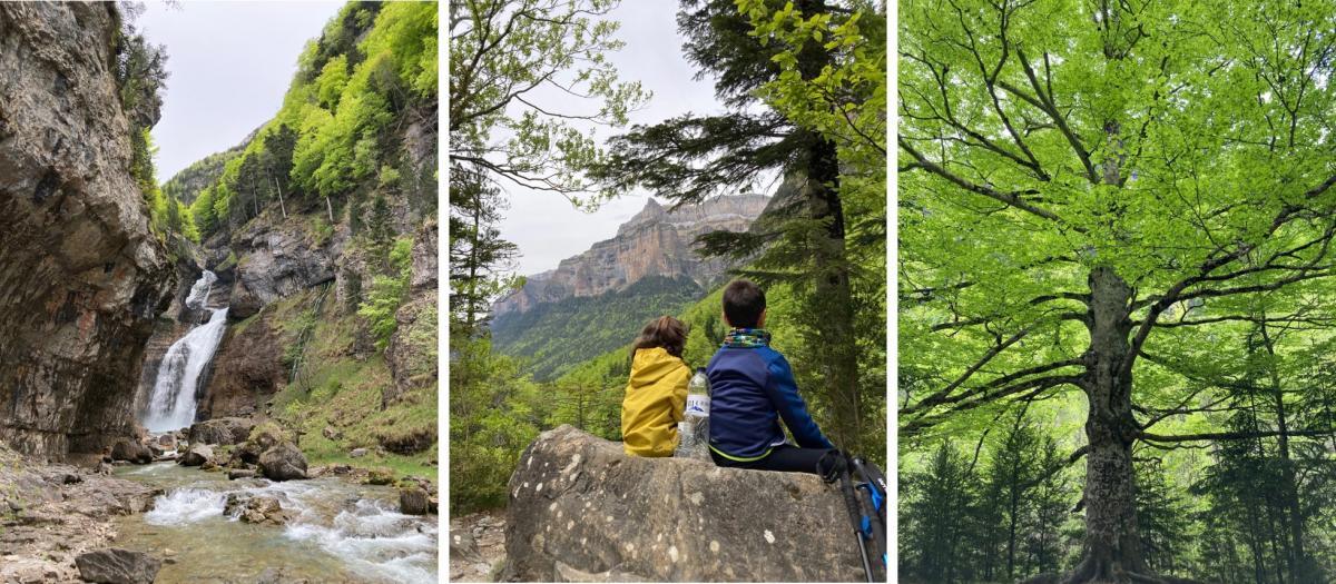 Parque Natural Ordesa y Monte Perdido_cascada estrecho_niños_arbol